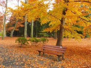 park-65999_640