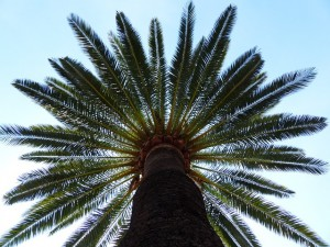 palm-187045_640