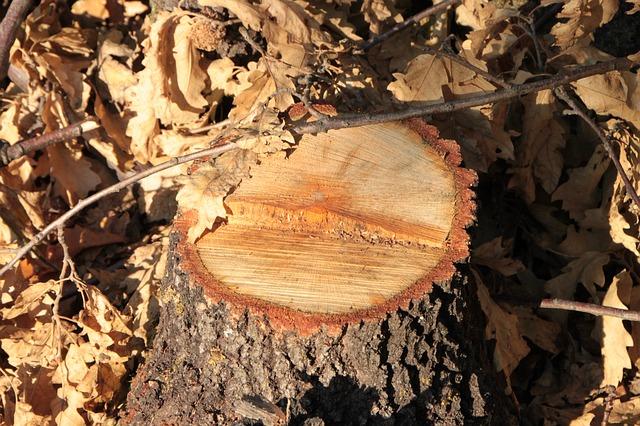 Quan es tala un arbre