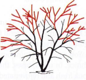 corte ramas arbusto