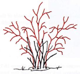 eliminar troncos principales