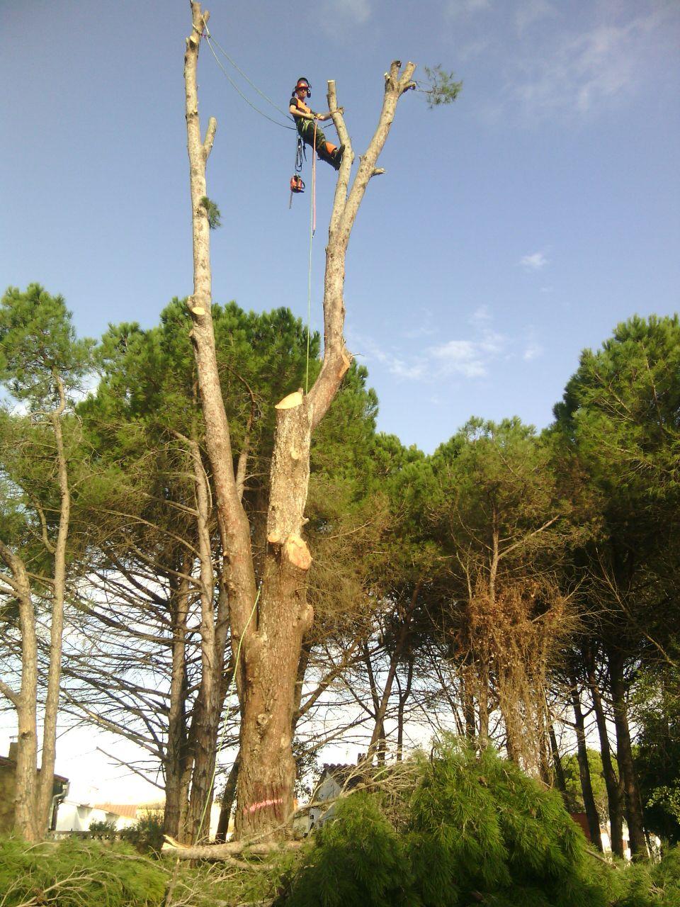 Tala pins a costat de carrer pública a l'Escala