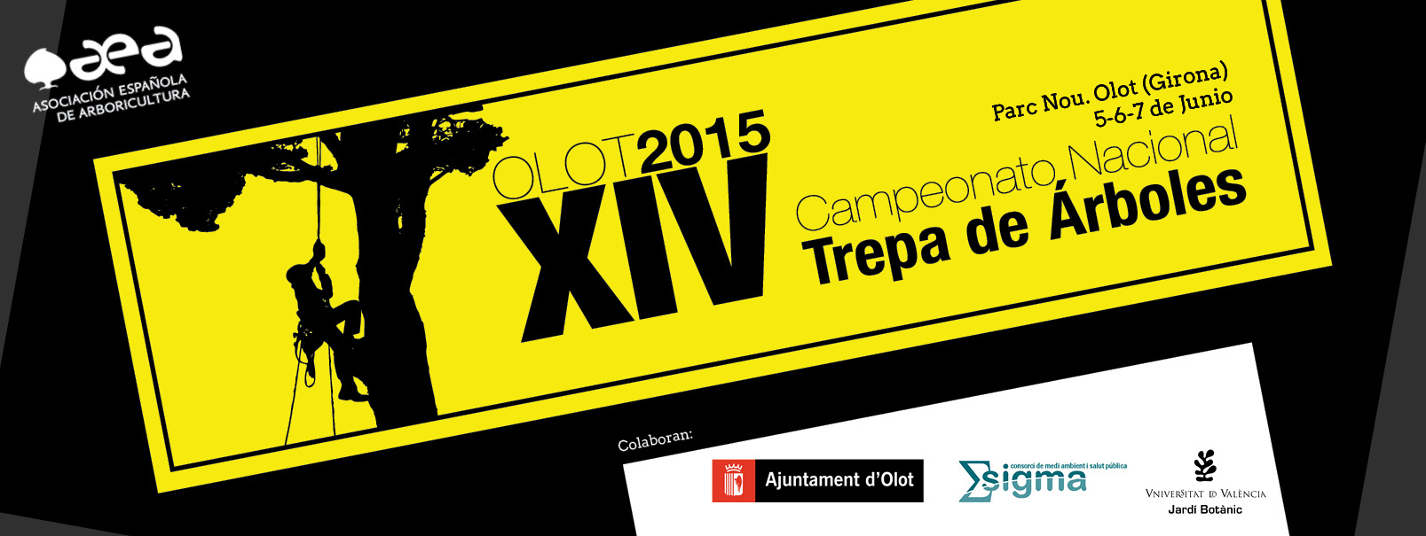 Campionat Nacional de trepa d'arbres a Olot !!!
