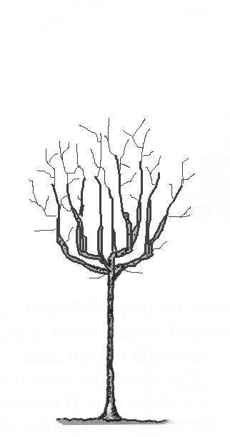 bad structure tree2