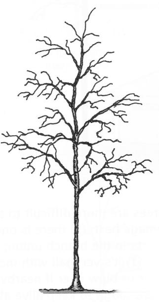 buena estructura arbol