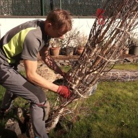 Com plantar un arbre