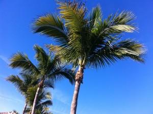 palm-116468_640