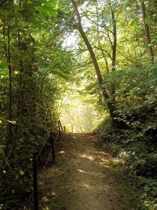 forest-path-397825_640