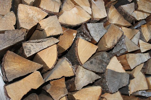 Els arbres adequats per fer llenya a Girona