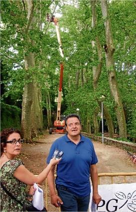 El ayuntamiento de Olot poda los arboles centenarios de Sant Roc