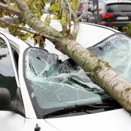 Valoració dels riscos dels arbres